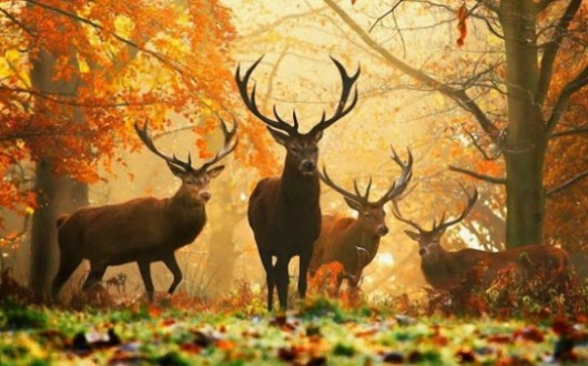 Wildsaison